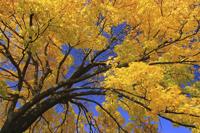 jaune2.jpg